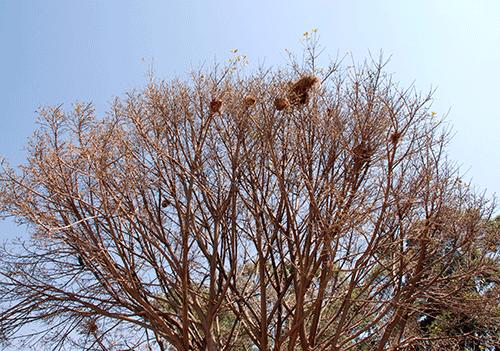 Gewobene hängende Nester