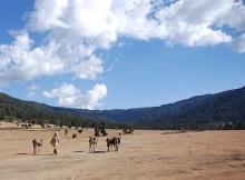 Dodola im Nordwesten der Bale Mountains