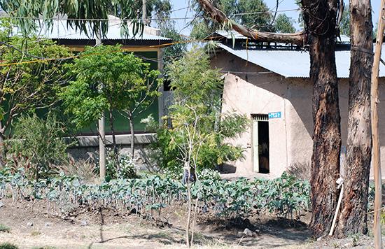 Garten der Sewasewe Organisation in Debre Libanos